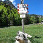 Il cane macchia controlla il passaggio sui sentieri