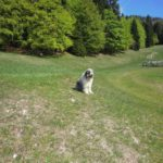 Il cane macchia in malga