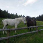 Cavalli in malga Kraun