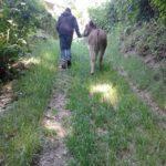 A passeggio con l'asino tobia in malga kraun